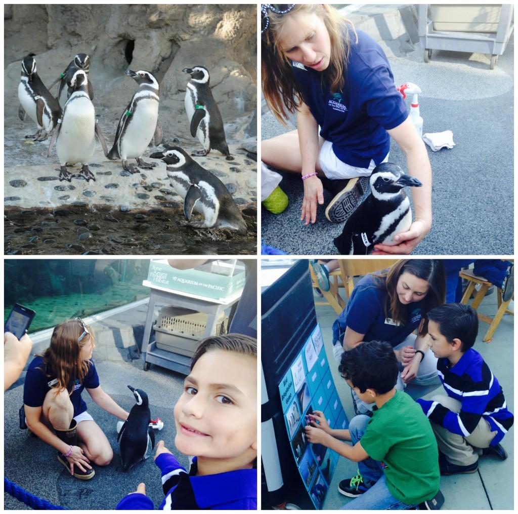 Exhibicion de Pinguinos