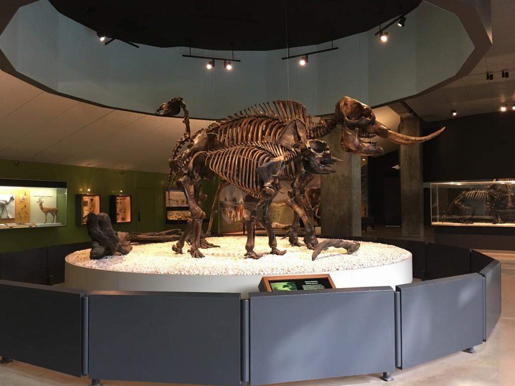 Museo La Brea Tar Pits