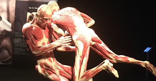 body-worldd-pulse