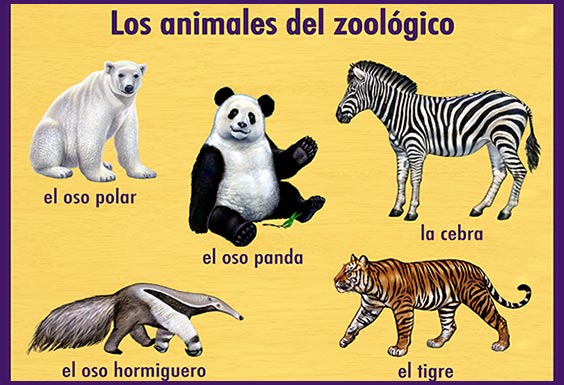 zoo_animals_564x385