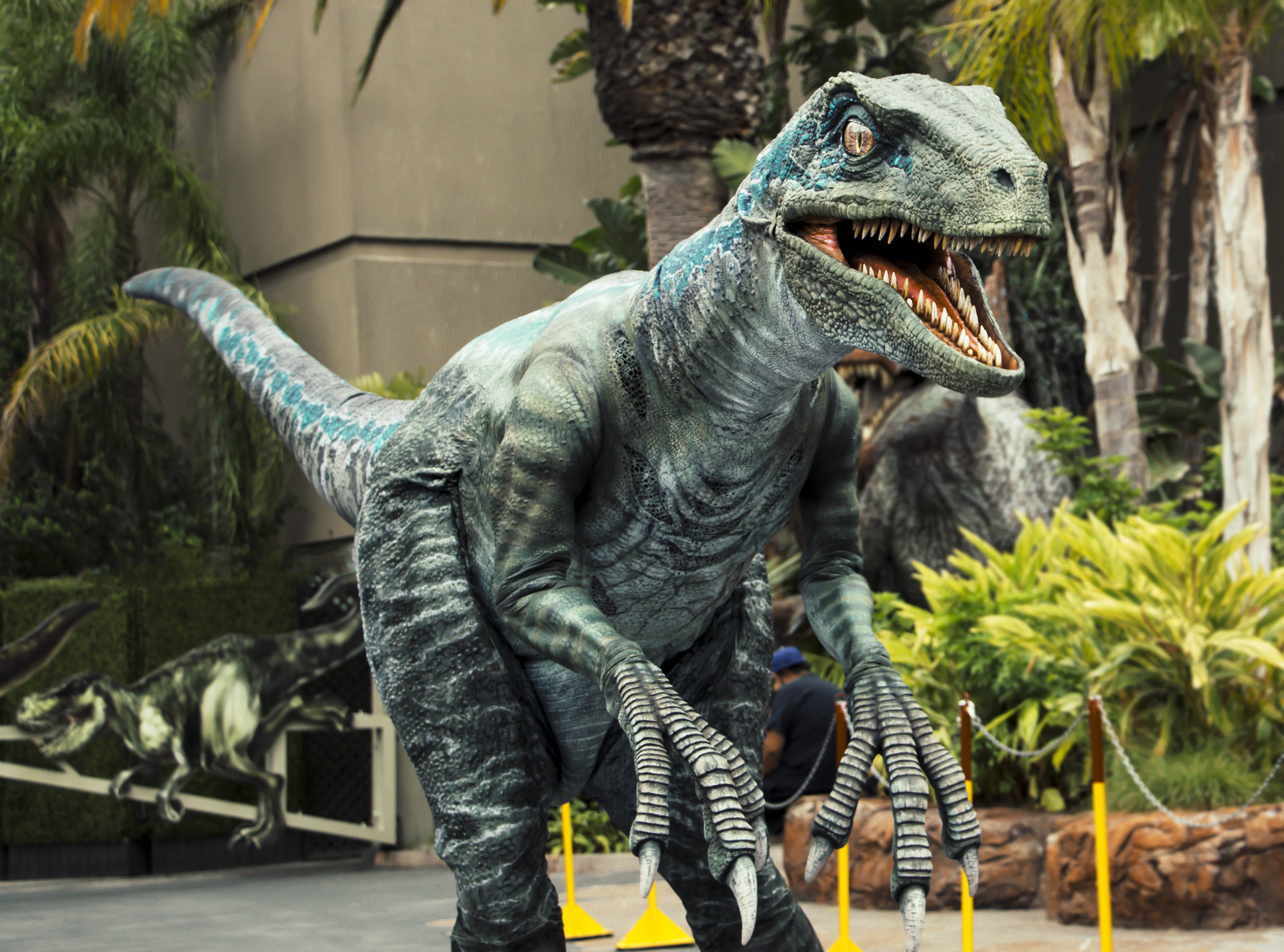 "Blue, the Velociraptor from Universal Pictures and Amblin Entertainment's Jurassic World Franchise, debuts at Universal Studios Hollywood and Universal Orlando Resort as part of the ""Raptor Encounter"" experience."