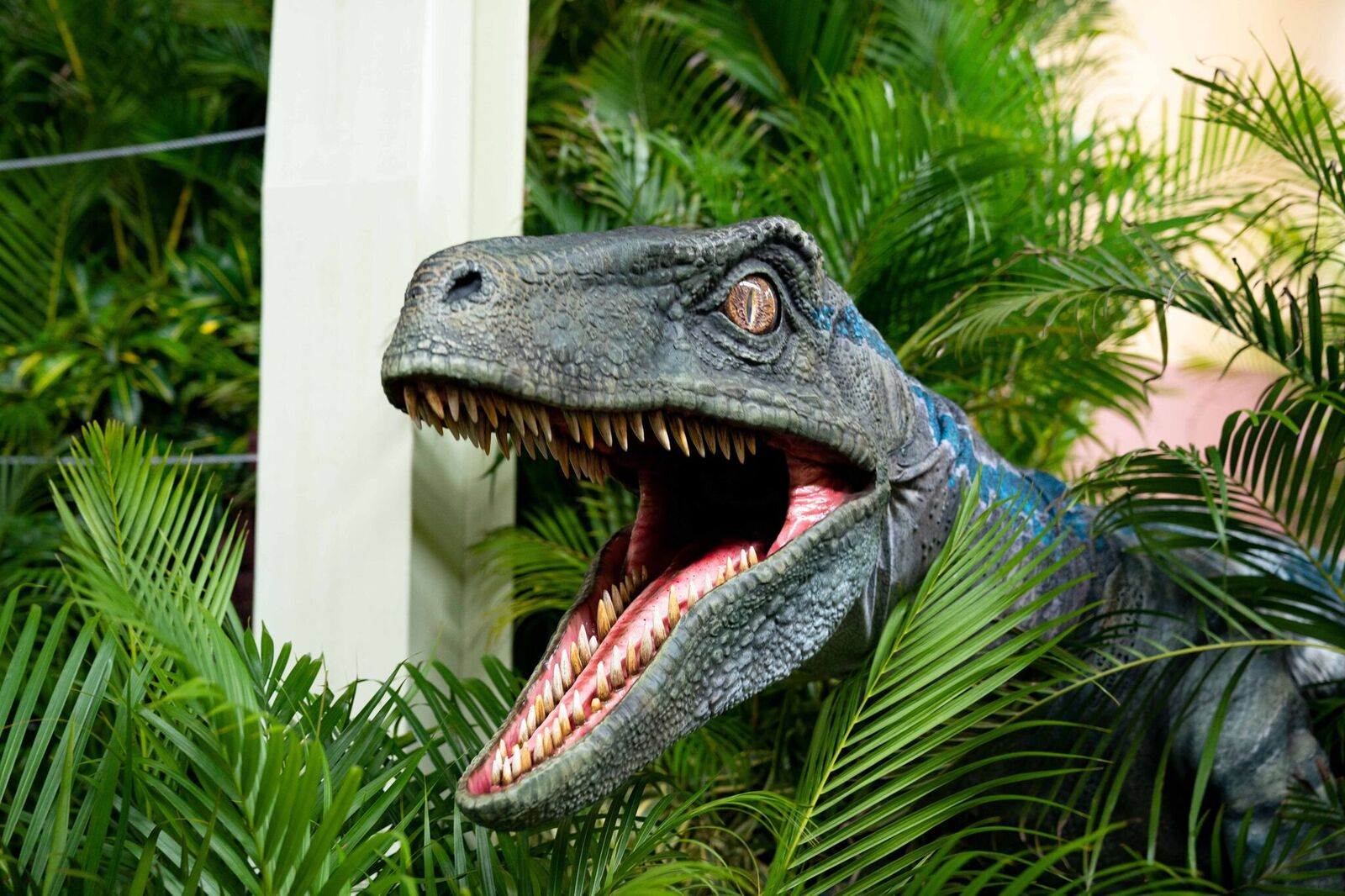 blue-at-raptor-encounter-universal-studios-