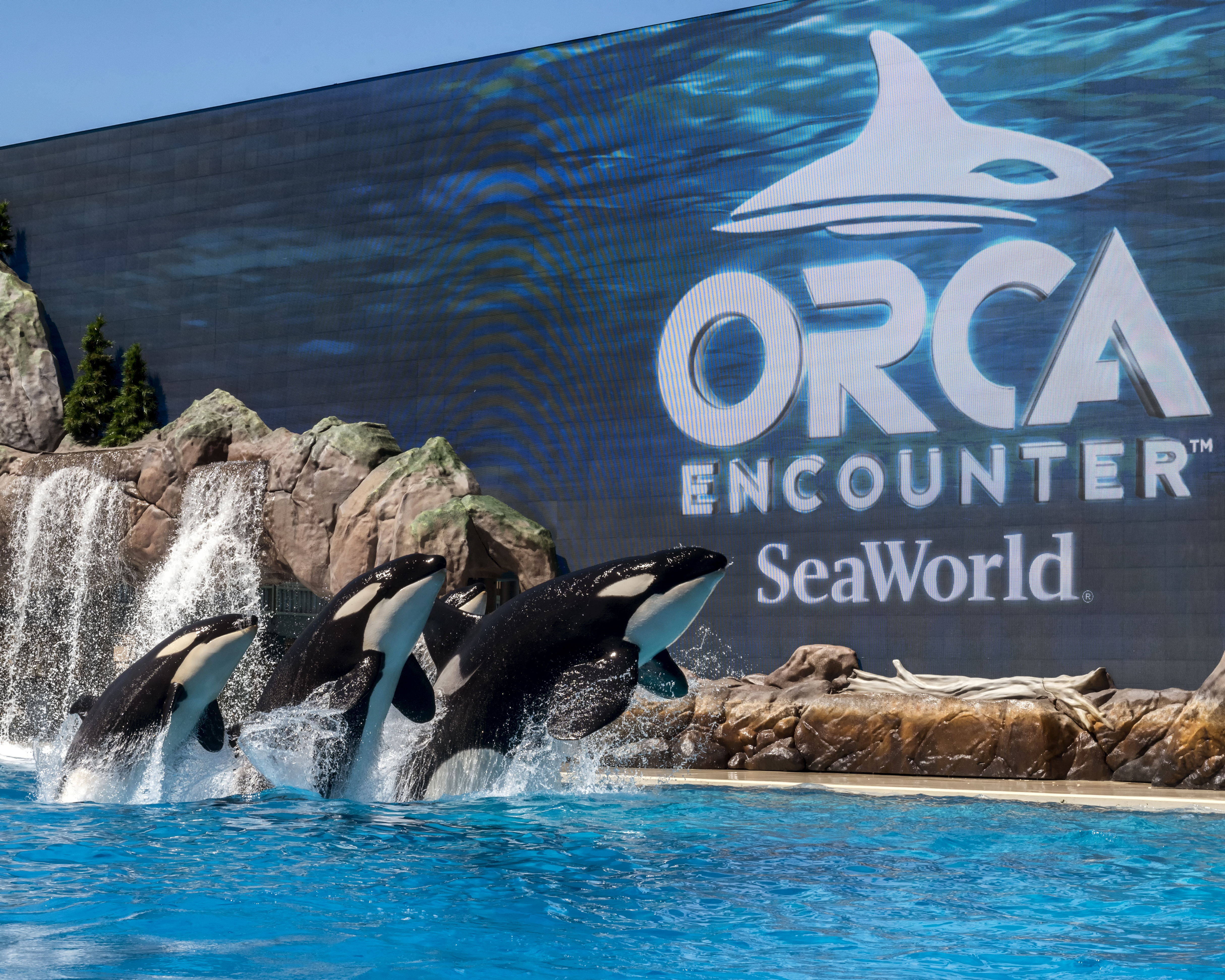 orca-encounter- Sea World San Diego